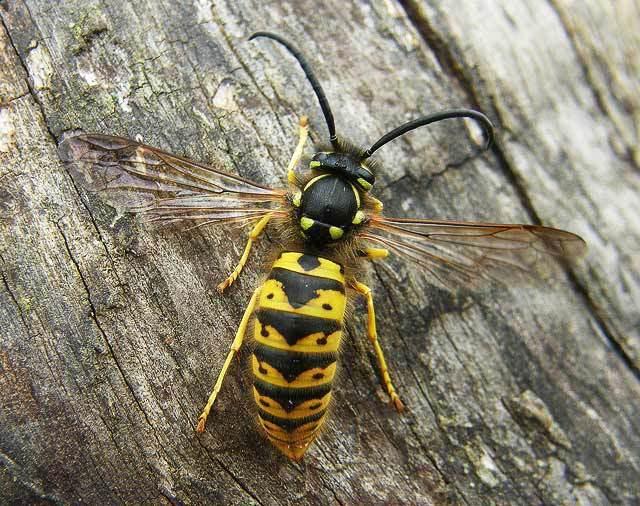 bee-on-tree-640x506-1200w