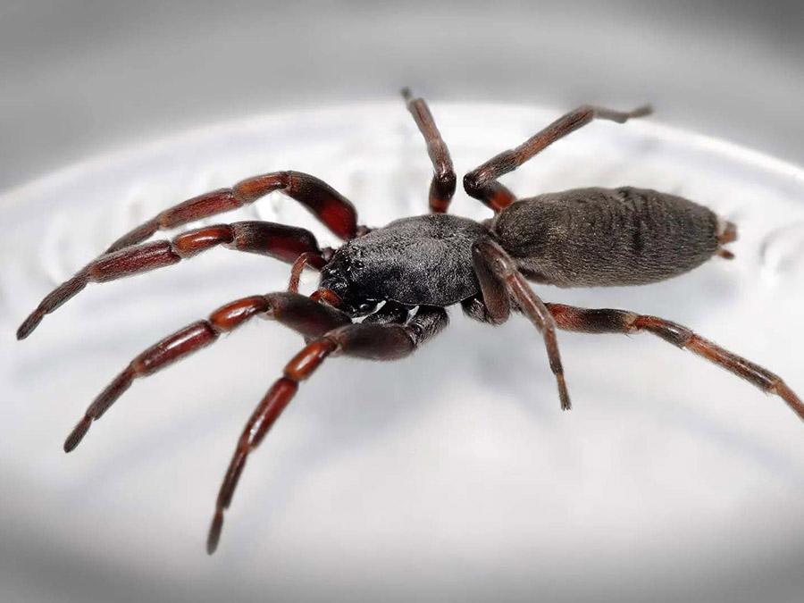 Pest Control in Tauranga